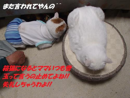 PC036133_convert_20131204070639.jpg
