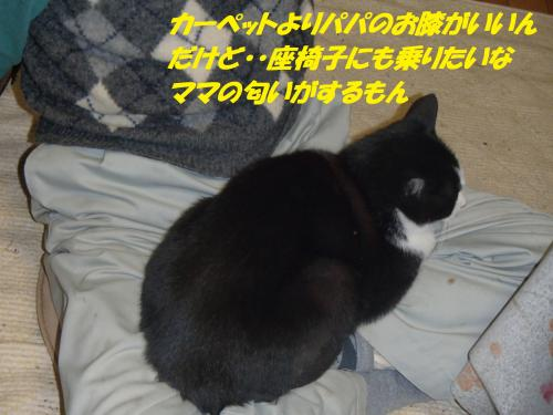 PC036134_convert_20131204070735.jpg