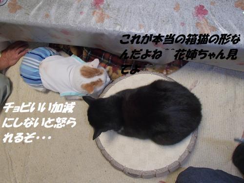 PC036135_convert_20131204070756.jpg