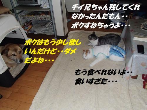 PC076152_convert_20131207075608.jpg