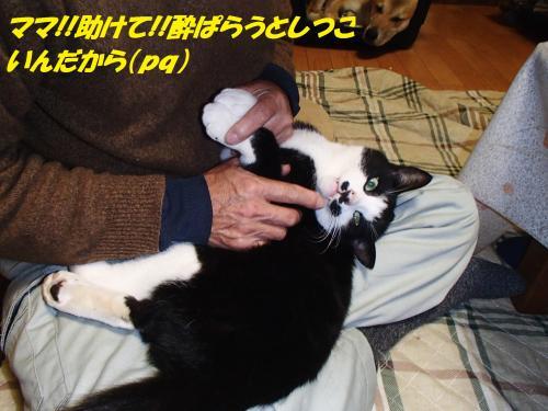 PC076158_convert_20131208053344.jpg