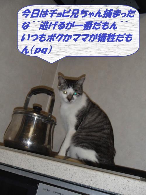 PC076167_convert_20131208053539.jpg