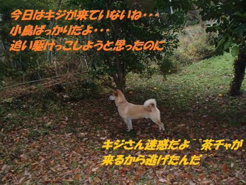PC096178_convert_20131210070205.jpg