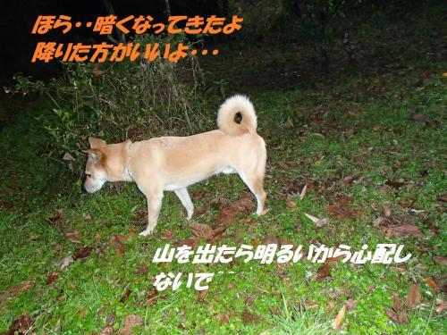 PC096183_convert_20131210070339.jpg