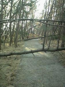 秋のお散歩2