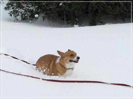 雪のなか走りまわる