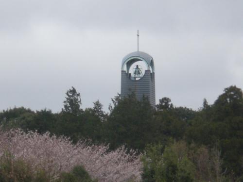 TCUの桜1