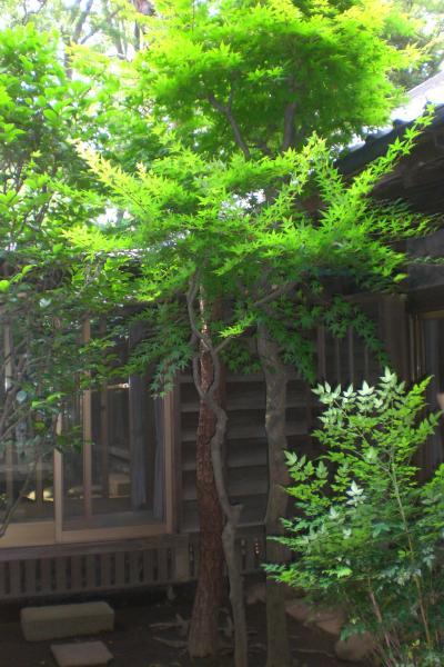 旧吉田家住宅3