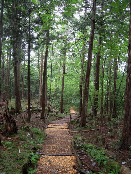 赤沢自然休養林②