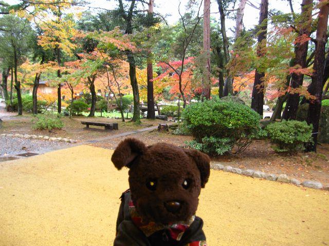 また弥彦公園に来たよ