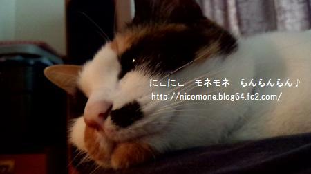 モネぽよ~ん2