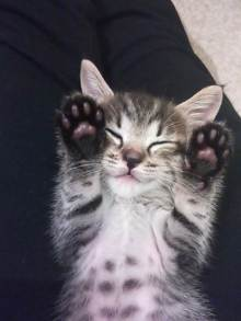 アーティストママのつれづれ日記-子猫2ヶ月