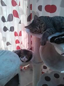 猫多頭飼い