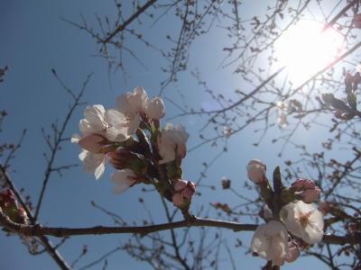 2011.04.06 小田島公園 018