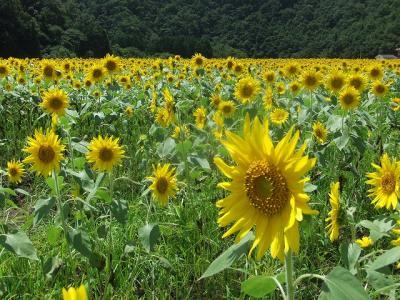 2011.08.04 大鬼谷キャンプ場 023