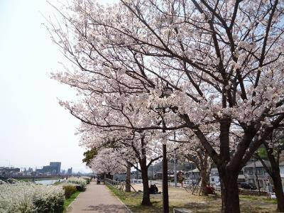 2012.04.09 花見 018
