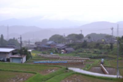 ジオラマ田圃