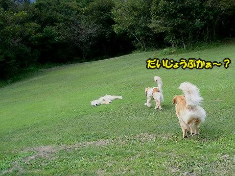 SANY7069_20100921161615.jpg