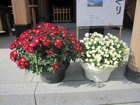 aki4.jpg