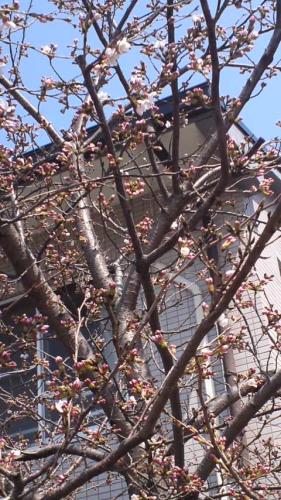 2012.3.27桜1