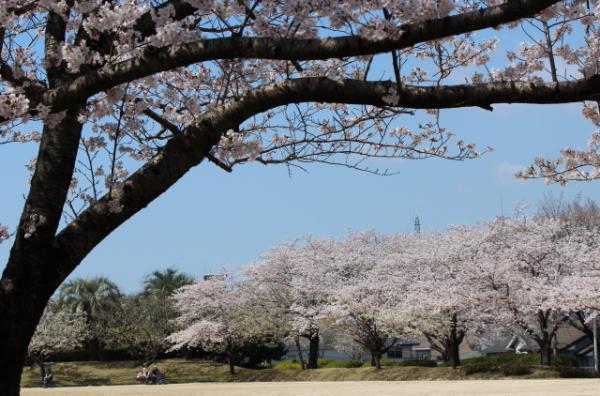 2012.4.1桜2