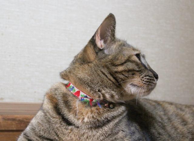 2012.9.6小梅5