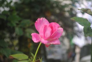 マッカトニー_convert_20120719213149