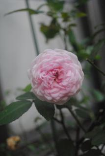 粉粧楼_convert_20121014192411
