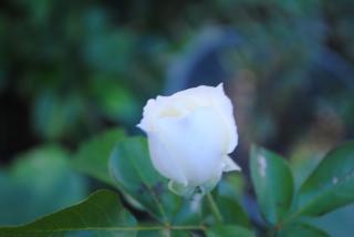ホワイトメディランド1_convert_20121110202123