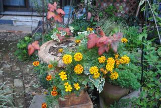 秋の庭1_convert_20121113202729