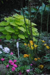 秋の庭2_convert_20121113202755