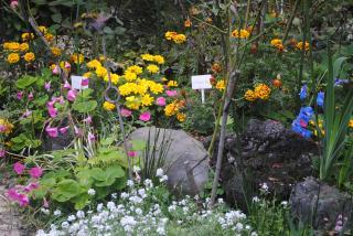 秋の庭3_convert_20121114184452