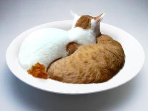 cat curry