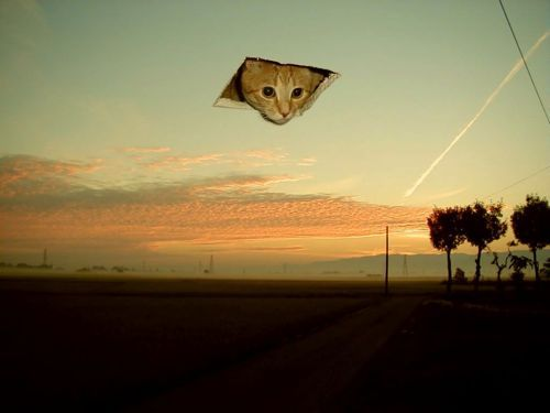god-cat[1]