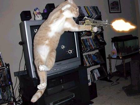 Crazy_cat[1]