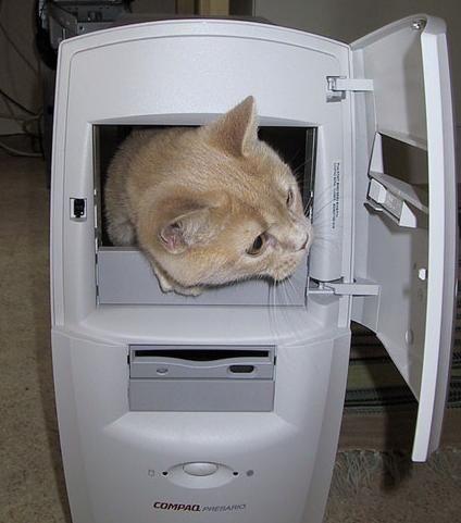 cat-in-computer[1]