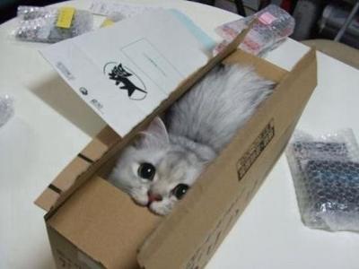 箱があったらはいりたい