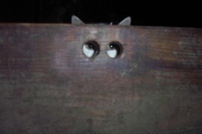 ppngcat