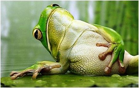 full frog