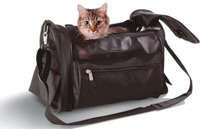 travel-cat[1]