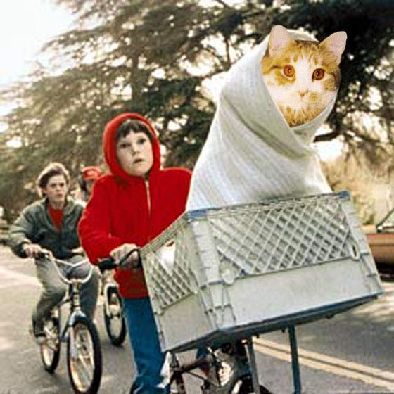 et_cat[1]