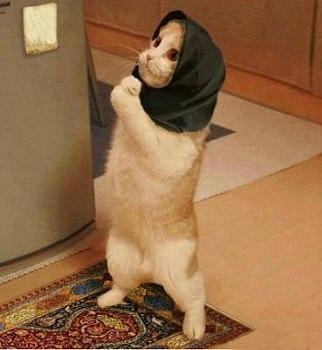 怪盗cat