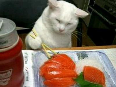 焼き鮭のほうがええねん
