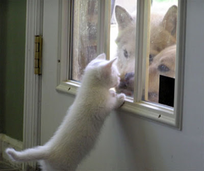 cat-dog-keep-out[1]
