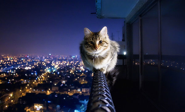fearless-cat[1]