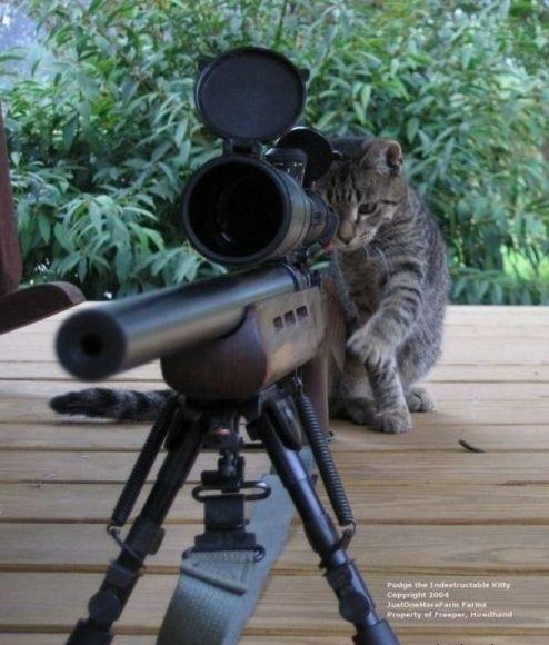 a.baa-cat-Sniper[1]