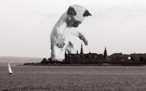 giant_cat_1[1]