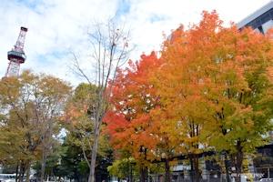 大通公園の紅葉
