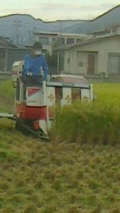 稲刈りタカオ