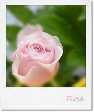 薔薇1201409